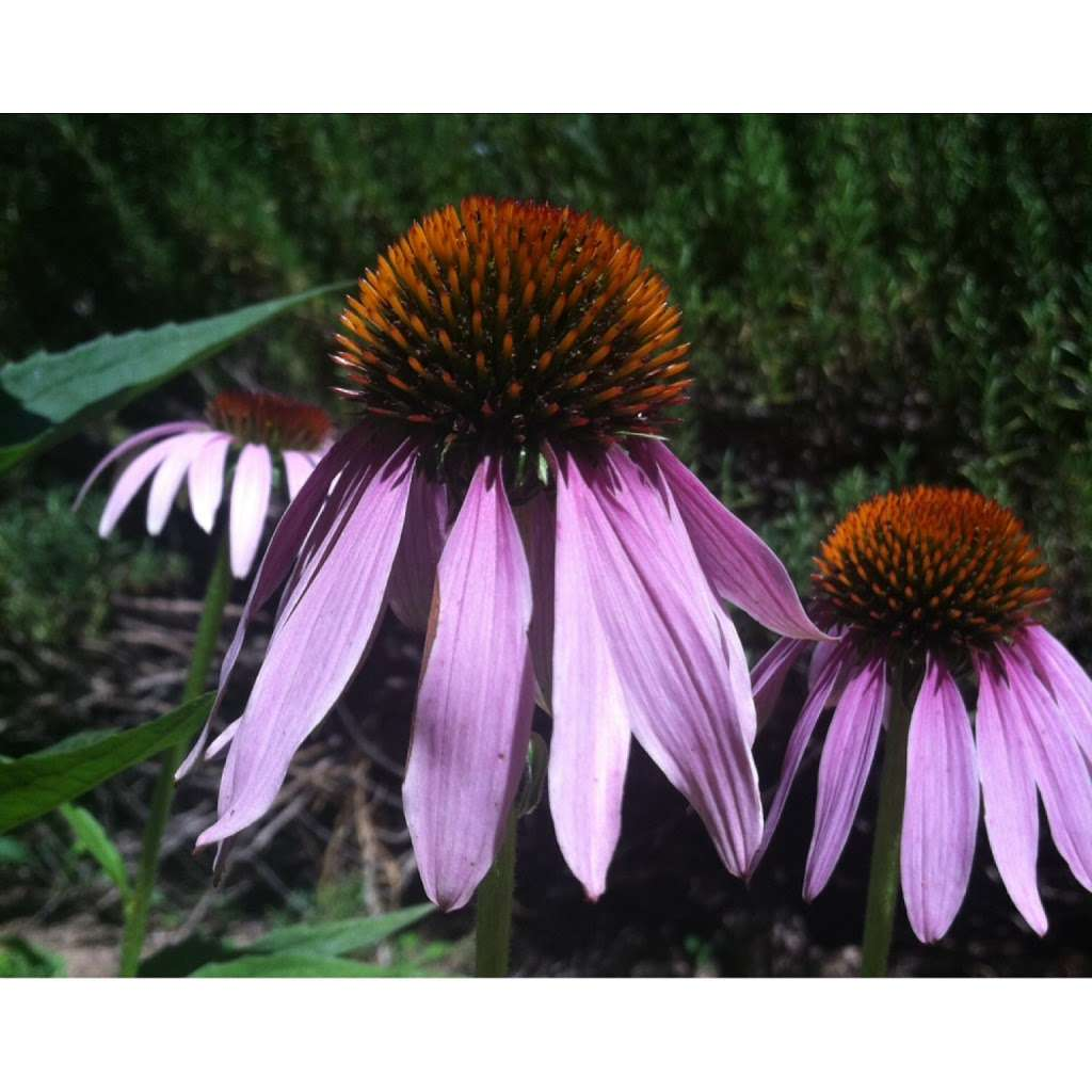 PlantWise Apothecary - spa  | Photo 1 of 2 | Address: 4570 Daywalt Rd, Sebastopol, CA 95472, USA