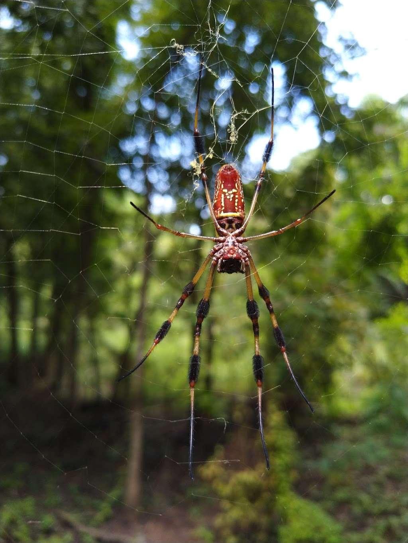 Anahuac National Wildlife Refuge Visitor Center - travel agency  | Photo 5 of 10 | Address: 4017 FM563, Wallisville, TX 77597, USA | Phone: (409) 267-3337