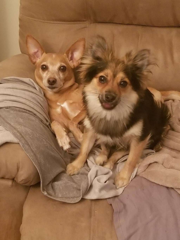 Welcome Home Doggy Daycare - park  | Photo 10 of 10 | Address: 16 Parkview Terrace, Bayonne, NJ 07002, USA | Phone: (201) 890-3347