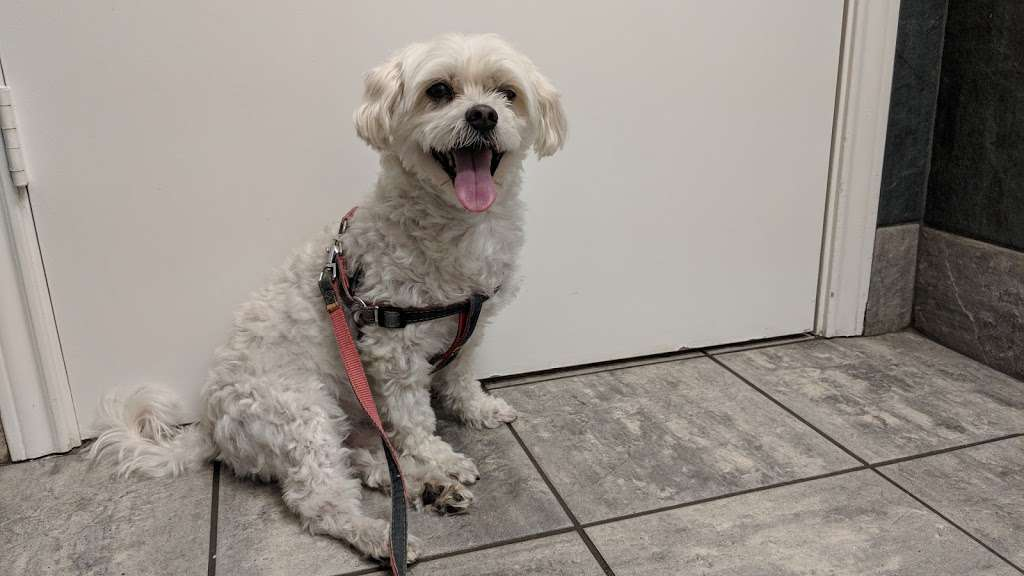 All Care Veterinary Hospital - veterinary care  | Photo 7 of 10 | Address: 353 N Denton Tap Rd, Coppell, TX 75019, USA | Phone: (972) 393-7750