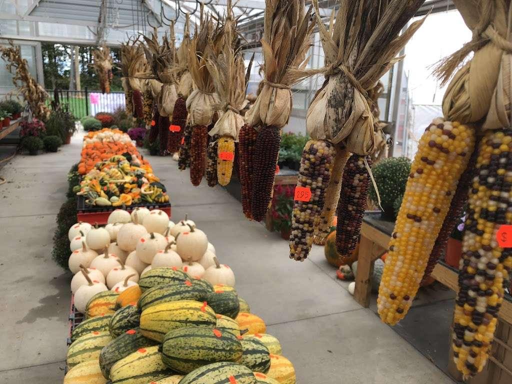 Country View Farm Market & Greenhouse - restaurant  | Photo 6 of 9 | Address: 1595 Maytown Rd, Elizabethtown, PA 17022, USA | Phone: (717) 361-6051