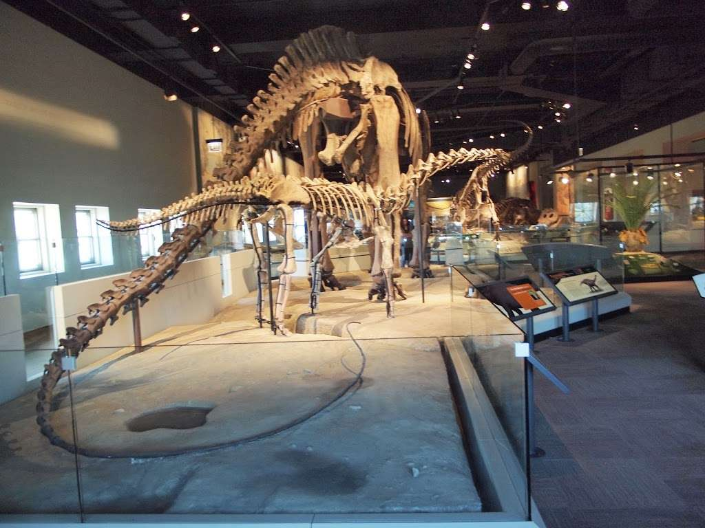 The Field Museum - museum  | Photo 5 of 10 | Address: 1400 S Lake Shore Dr, Chicago, IL 60605, USA | Phone: (312) 922-9410