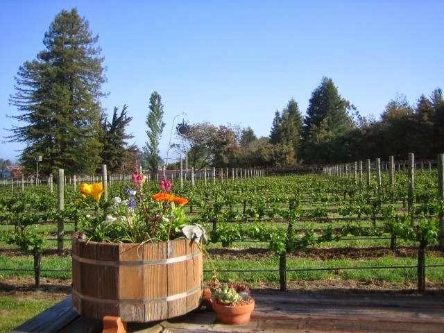Pearlessence Vineyard Inn - lodging  | Photo 2 of 2 | Address: 4097 Hessel Rd, Sebastopol, CA 95472, USA | Phone: (707) 823-5092