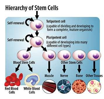 Lifemed Regenerative Stem Cell Center - physiotherapist  | Photo 5 of 9 | Address: 2575 Collins Ave c4, Miami Beach, FL 33140, USA | Phone: (786) 496-4333