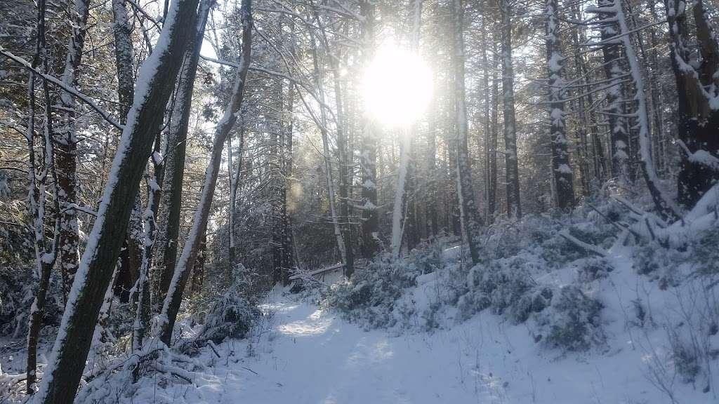 Hunnewell Forest, Oak Street Lot - park    Photo 9 of 9   Address: Main Trail, Natick, MA 01760, USA