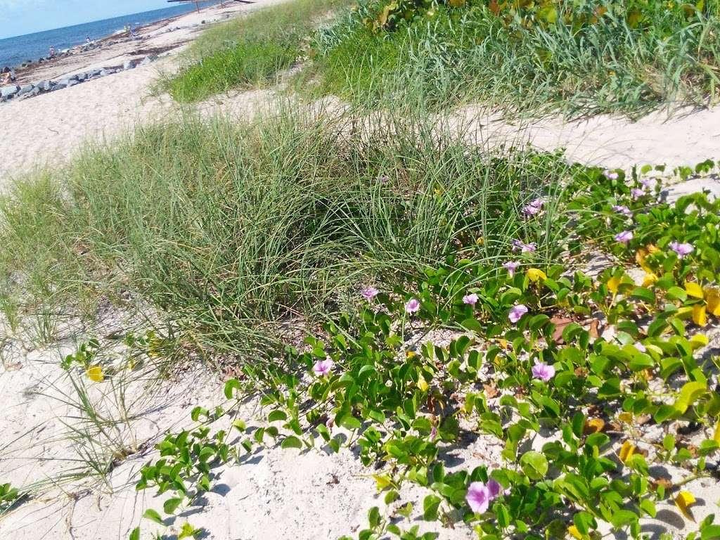 Ocean Inlet Park - park    Photo 7 of 10   Address: 6990 N Ocean Blvd, Boynton Beach, FL 33435, USA   Phone: (561) 966-6600