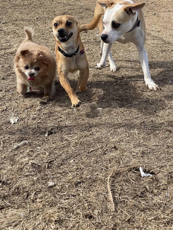 Meridian Dog Park - park    Photo 5 of 9   Address: 2127 N Meridian Ave, Wichita, KS 67203, USA   Phone: (316) 268-4361