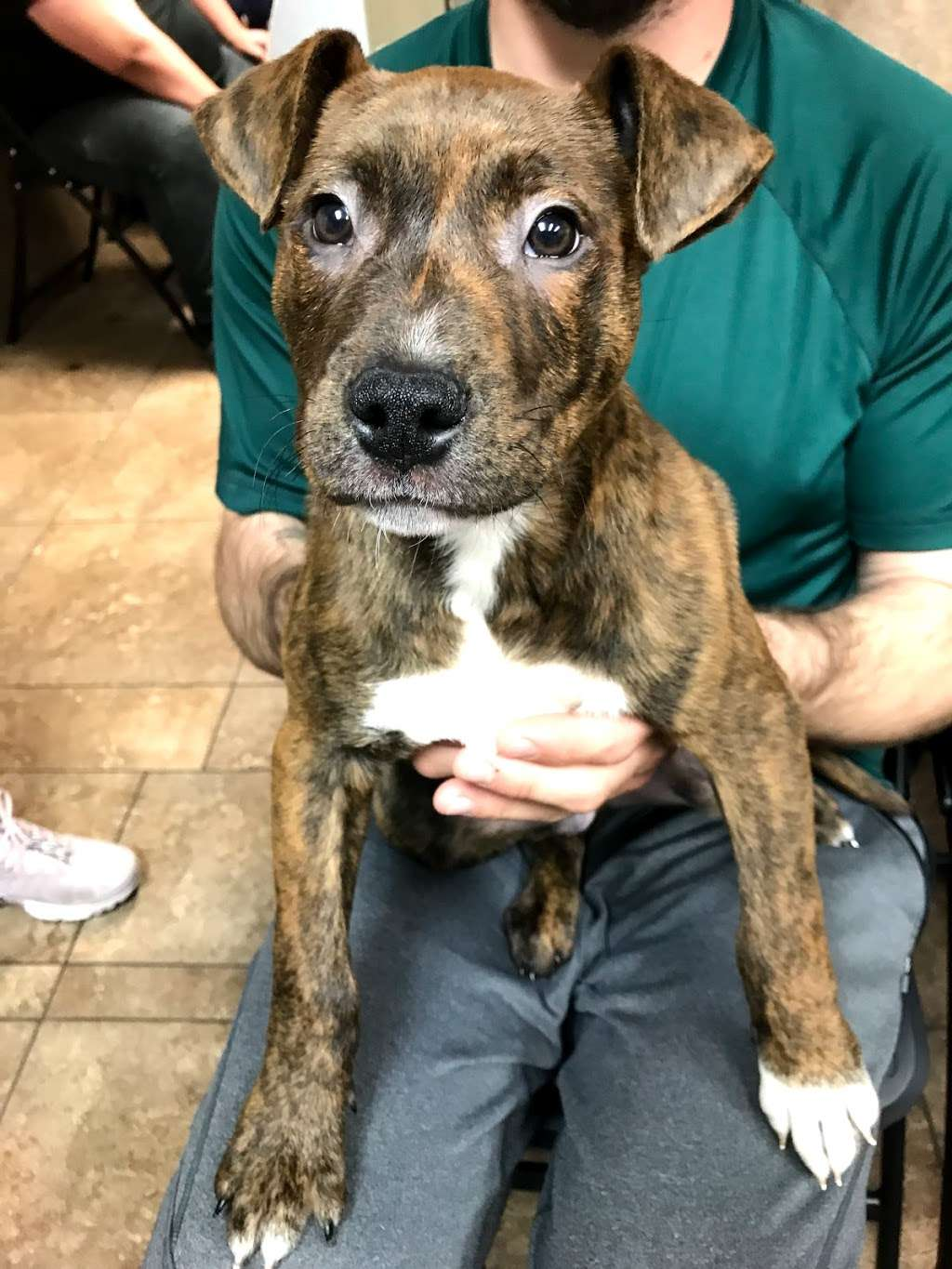 Houstons Ear Cropping Clinic - veterinary care  | Photo 3 of 10 | Address: 27351 Blueberry Hill Dr #37, Oak Ridge North, TX 77385, USA | Phone: (713) 818-7956