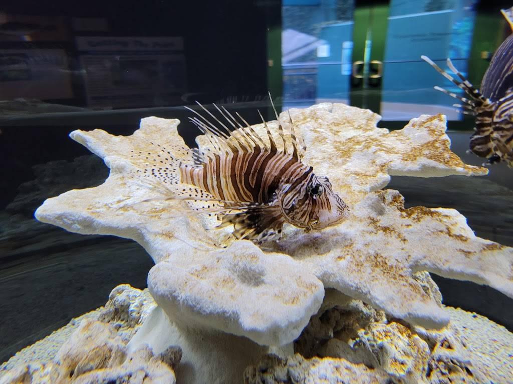 Virginia Living Museum - zoo  | Photo 8 of 9 | Address: 524 J Clyde Morris Blvd, Newport News, VA 23601, USA | Phone: (757) 595-1900