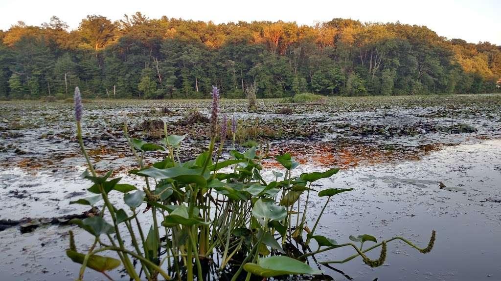 Moon Lake State Forest Recreation Area - park  | Photo 9 of 10 | Address: Hunlock Creek, PA 18621, USA