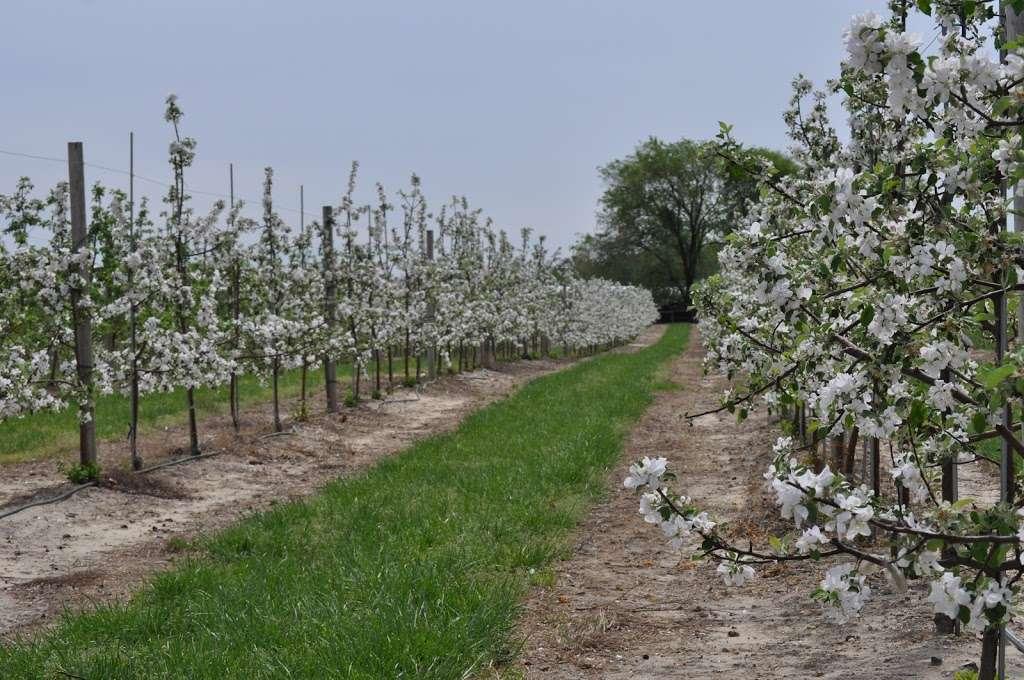 Fruitwood Farms, Inc. - store  | Photo 1 of 10 | Address: 419 Elk Rd, Monroeville, NJ 08343, USA | Phone: (856) 881-7748