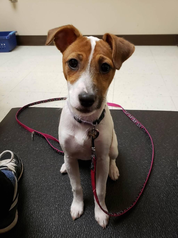 Skaer Veterinary Clinic - veterinary care  | Photo 2 of 10 | Address: 404 S Edgemoor St #100, Wichita, KS 67218, USA | Phone: (316) 683-4641
