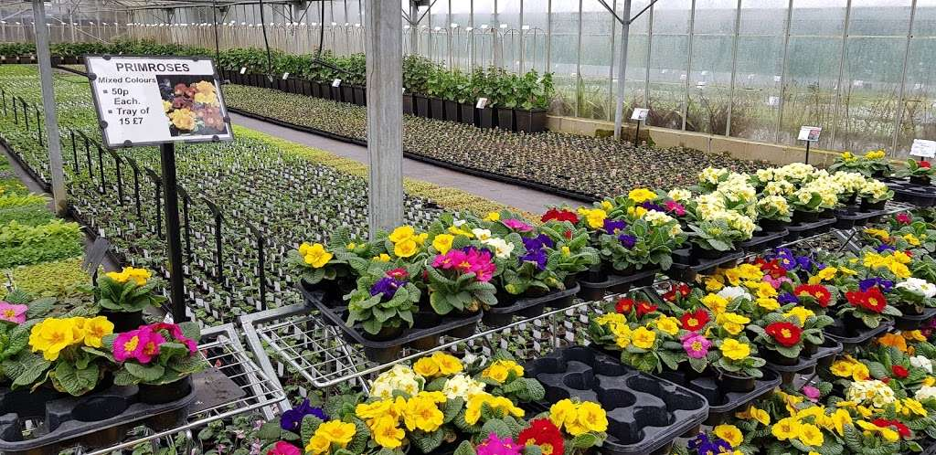 Matthews Plants - store  | Photo 5 of 10 | Address: Hadley Nursery, Tylers Rd, Roydon, Harlow CM19 5LJ, UK | Phone: 01279 793539