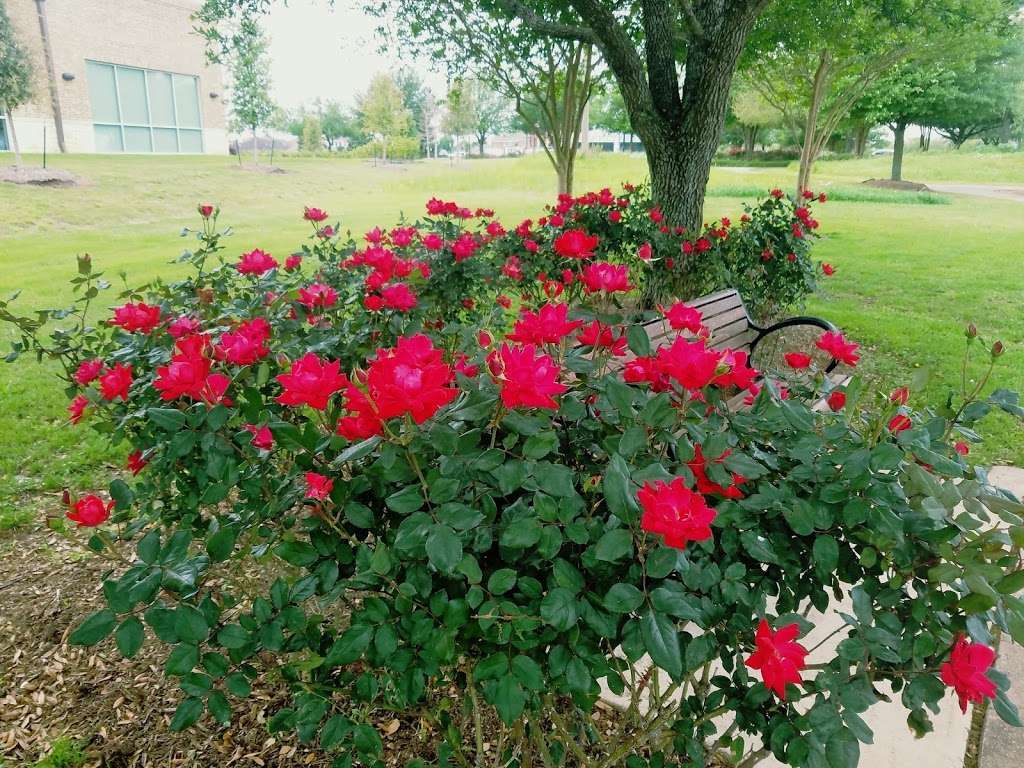 Telfair Community Park - park  | Photo 3 of 10 | Address: Chatham Ave, Sugar Land, TX 77479, USA