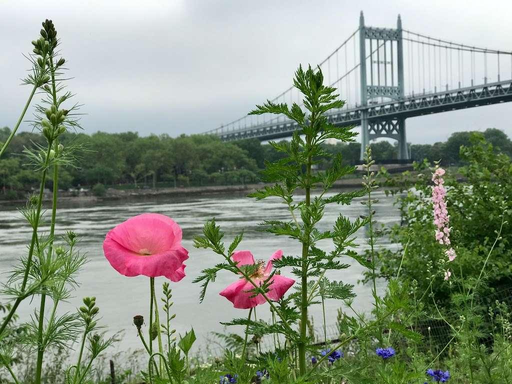 Native Plant Garden - park  | Photo 3 of 8 | Address: 11 Wards Meadow Loop, New York, NY 10035, USA