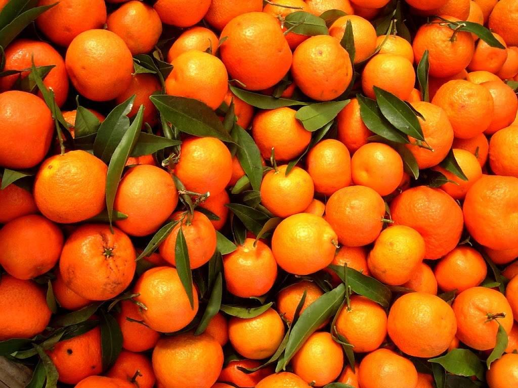 The Citrus Tree - home goods store  | Photo 8 of 8 | Address: 10031 Corbett Rd, Cincinnati, OH 45231, USA | Phone: (513) 313-3638