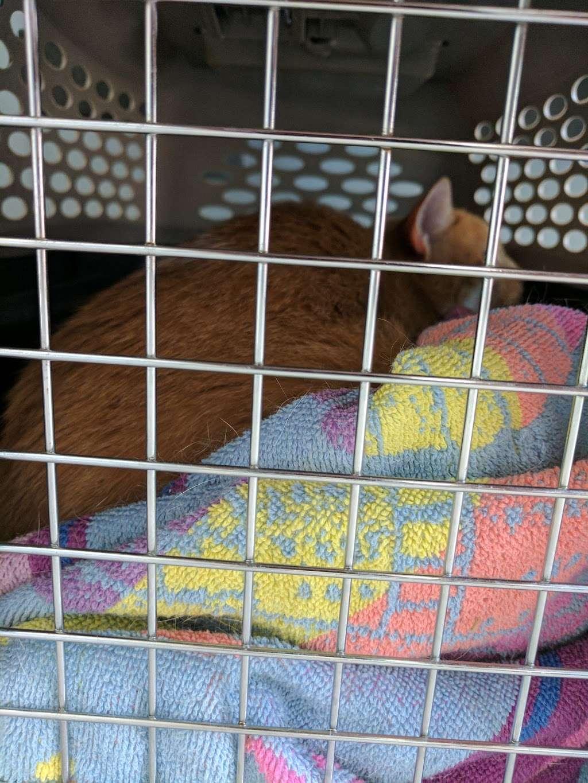 Englewood Cliffs Veterinary, PA - veterinary care  | Photo 4 of 7 | Address: 34 Sylvan Ave, Englewood Cliffs, NJ 07632, USA | Phone: (201) 461-8651