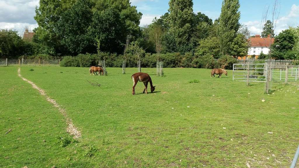 Hobbledown Adventure Farm Park and Zoo - zoo  | Photo 2 of 10 | Address: Horton Ln, Epsom KT19 8PT, UK | Phone: 01372 848990