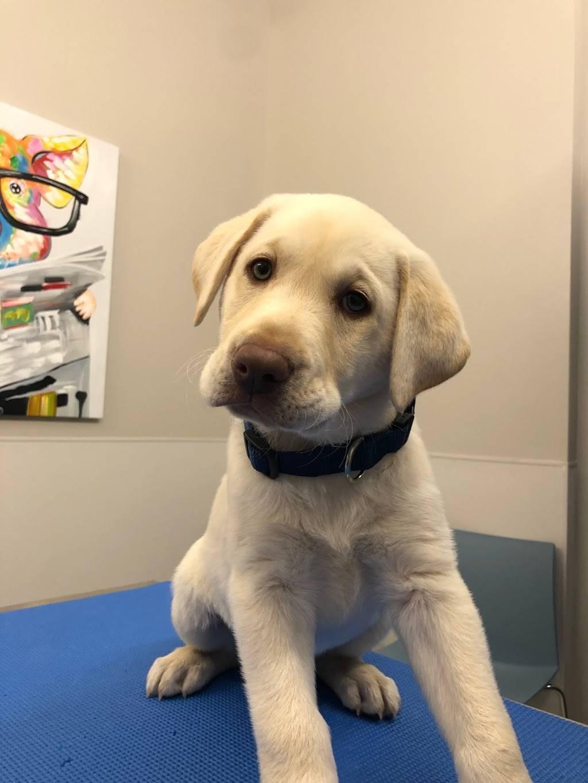 Hoboken Vets Animal Clinic - veterinary care  | Photo 6 of 10 | Address: 1160 Maxwell Ln, Hoboken, NJ 07030, USA | Phone: (201) 559-5133