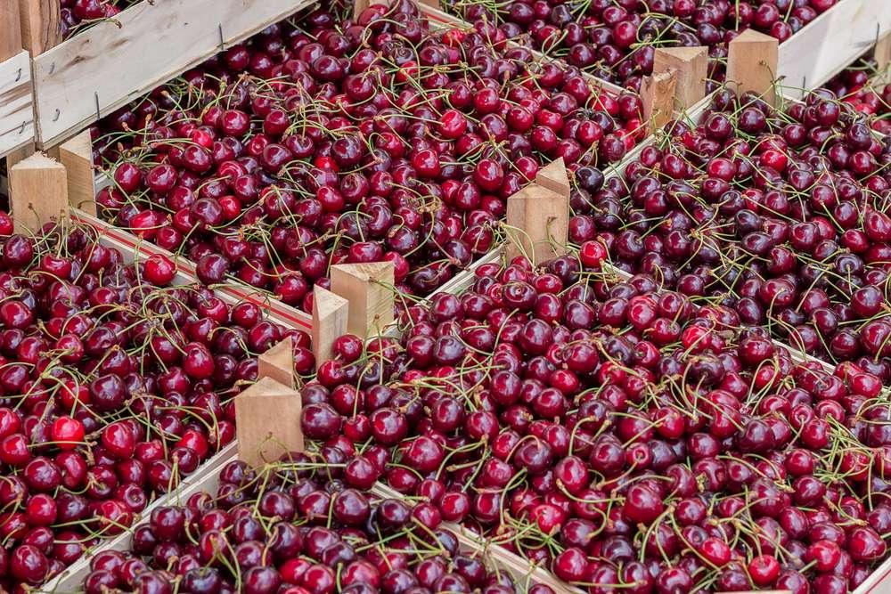 Fruitwood Farms, Inc. - store  | Photo 8 of 10 | Address: 419 Elk Rd, Monroeville, NJ 08343, USA | Phone: (856) 881-7748