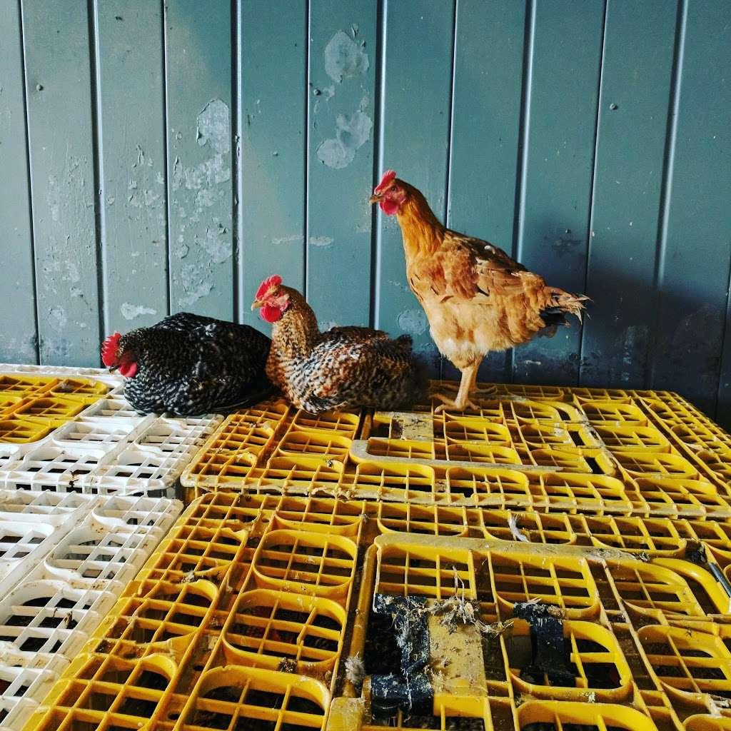 Dey Farm at Oliveira Acres - store  | Photo 9 of 10 | Address: 215 Dey Rd, Cranbury, NJ 08512, USA | Phone: (609) 395-0232