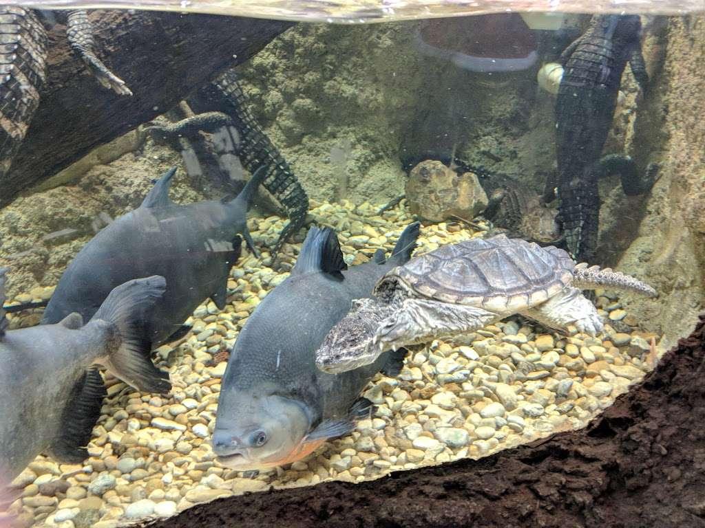 San Antonio Aquarium - aquarium  | Photo 6 of 10 | Address: 6320 Bandera Rd, Leon Valley, TX 78238, USA | Phone: (210) 310-3210