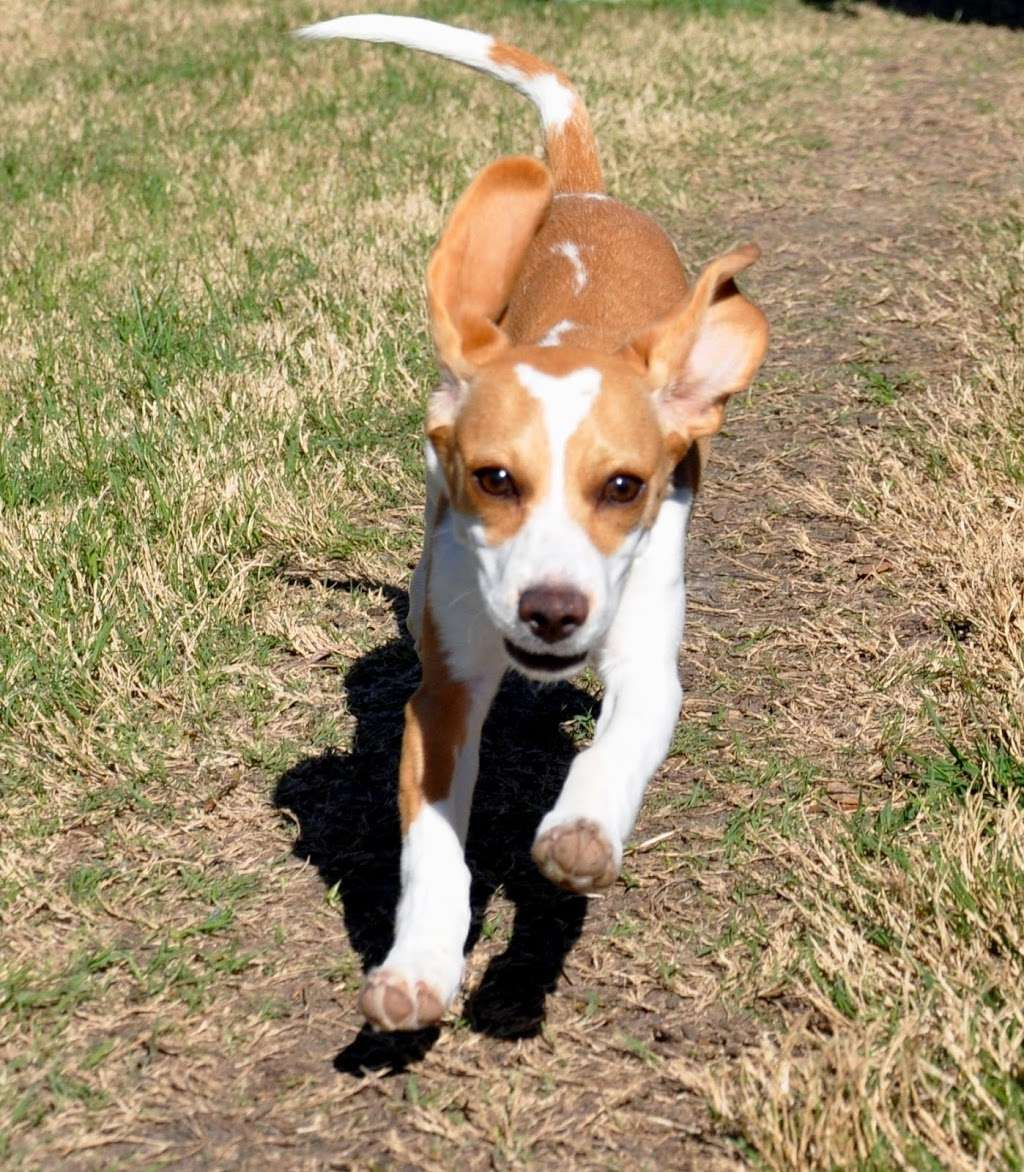 Lake Olympia Animal Hospital - veterinary care  | Photo 3 of 10 | Address: 20413 University Blvd, Missouri City, TX 77459, USA | Phone: (281) 499-7242