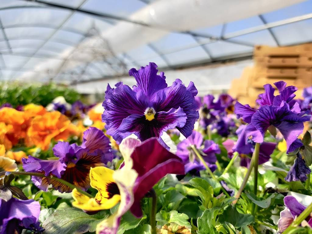 Edwards Greenhouse - florist  | Photo 8 of 10 | Address: 4106 Sand Creek St, Boise, ID 83703, USA | Phone: (208) 342-7548
