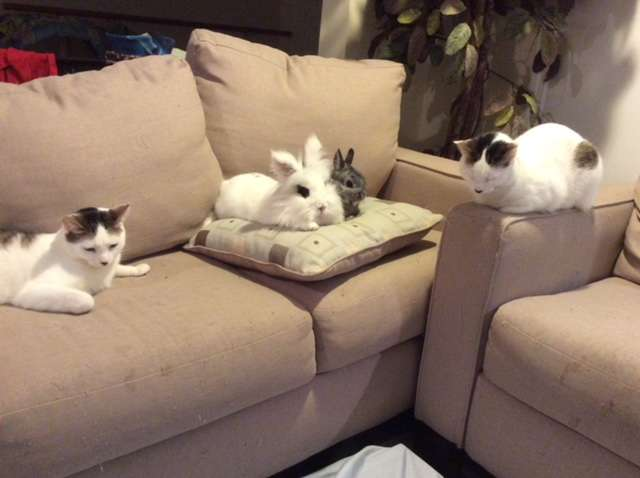 Catnip and Carrots - veterinary care  | Photo 2 of 10 | Address: 2056 Jericho Turnpike, New Hyde Park, NY 11040, USA | Phone: (516) 877-7080