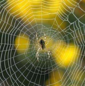 Nature Science Pest Control, Inc. - home goods store  | Photo 2 of 3 | Address: 607 Martin Ave #100, Rohnert Park, CA 94928, USA | Phone: (707) 586-2514