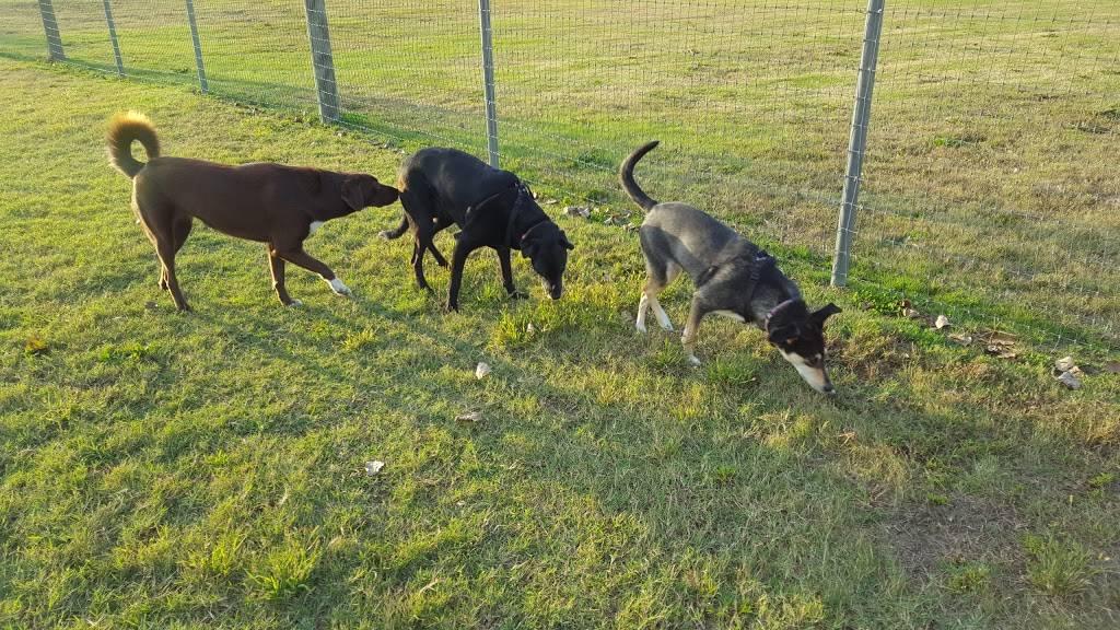 Meridian Dog Park - park  | Photo 4 of 9 | Address: 2127 N Meridian Ave, Wichita, KS 67203, USA | Phone: (316) 268-4361