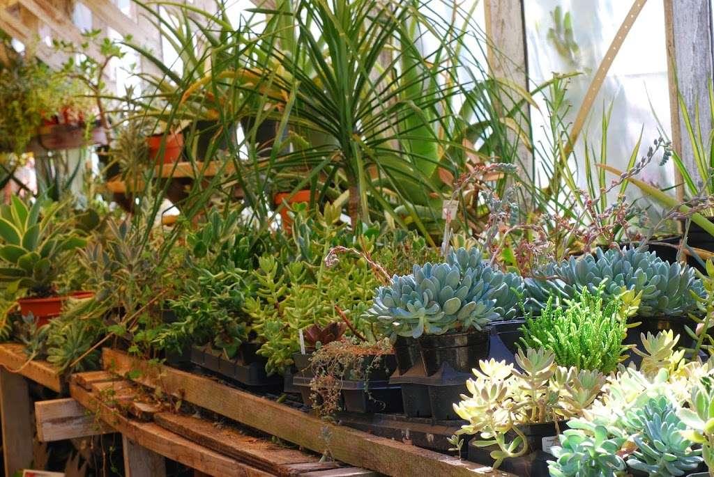 Plant Works - florist  | Photo 2 of 10 | Address: 7945 Hwy 9, Ben Lomond, CA 95005, USA | Phone: (831) 336-2212