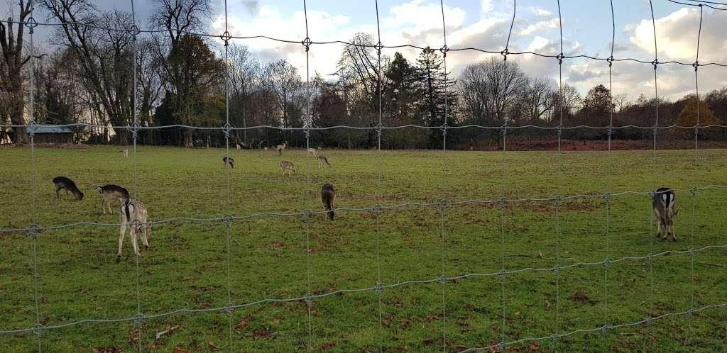 South Weald Deer Enclosure - zoo  | Photo 2 of 4 | Address: Brentwood CM14 5QS, UK