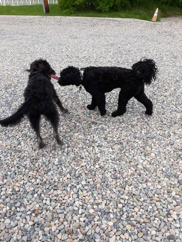 Boneyard Dog Park - park  | Photo 8 of 10 | Address: Kingston, MA 02364, USA