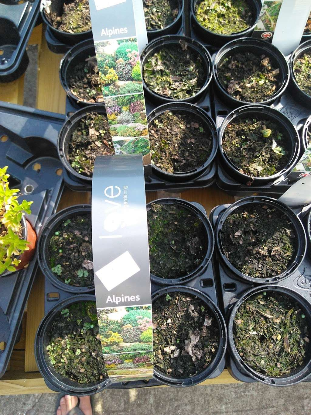 Buckland Nurseries Garden Centre - store  | Photo 3 of 10 | Address: Reigate Rd, Reigate, Betchworth RH2 9RE, UK | Phone: 01737 242990