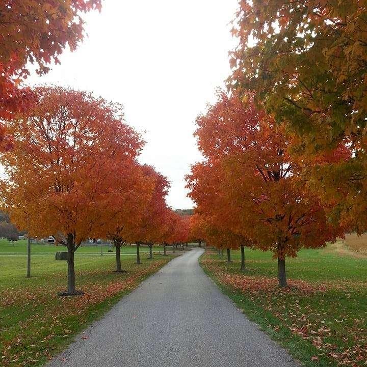 Serendipity Horse Meadows Farm - travel agency  | Photo 1 of 2 | Address: 17907 Spielman Rd, Fairplay, MD 21733, USA | Phone: (301) 514-5671