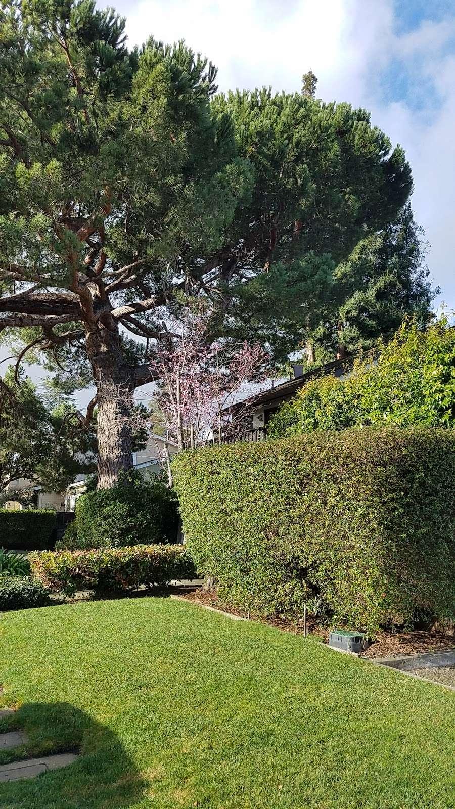 Del Medio Park - park  | Photo 7 of 10 | Address: 380 Del Medio Ave, Mountain View, CA 94040, USA | Phone: (650) 903-6326