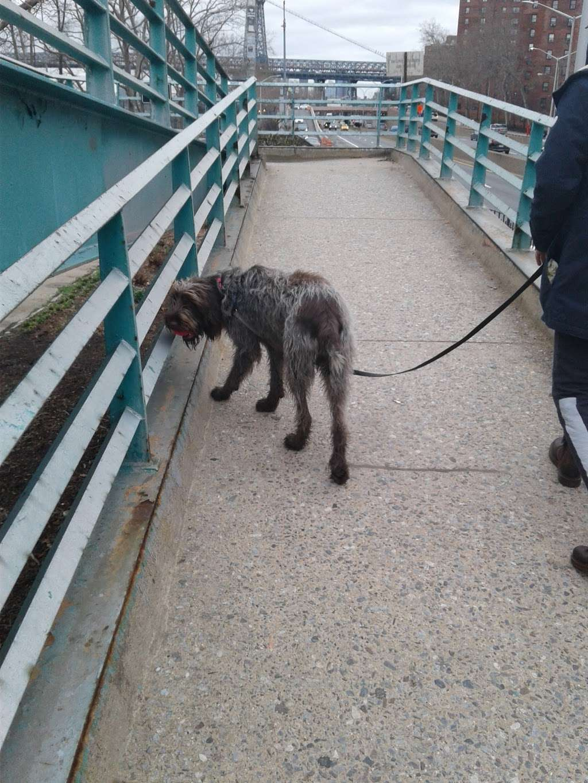 John V. Lindsay East River Park Track - park  | Photo 9 of 10 | Address: 1234 E 6th St, New York, NY 10009, USA | Phone: (212) 639-9675