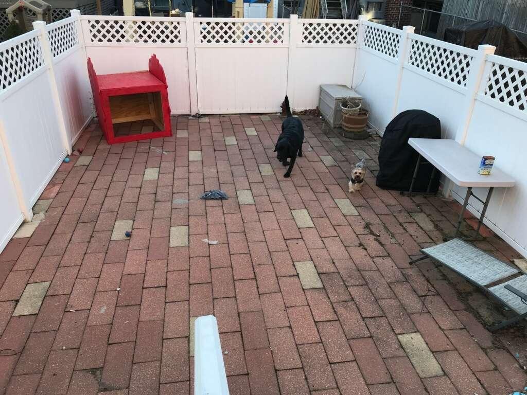 Welcome Home Doggy Daycare - park  | Photo 2 of 10 | Address: 16 Parkview Terrace, Bayonne, NJ 07002, USA | Phone: (201) 890-3347