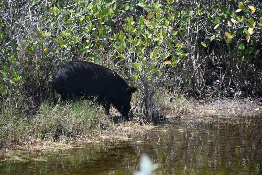 Blackpoint Wildlife Drive Entrance - park  | Photo 2 of 10 | Address: Blackpoint Wildlife Dr, Titusville, FL 32796, USA