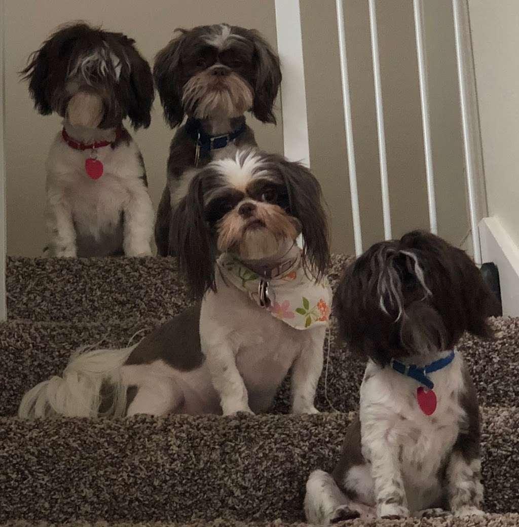 S&S Family Pet Hospital - veterinary care  | Photo 5 of 10 | Address: 15714 Huebner Rd, San Antonio, TX 78248, USA | Phone: (210) 579-0518