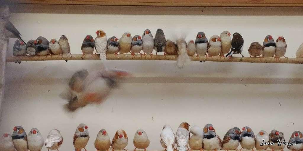 The Enfield Bird Centre bird cages - pet store  | Photo 8 of 10 | Address: Cattlegate Rd, Enfield EN2 9DS, UK | Phone: 020 8367 9223