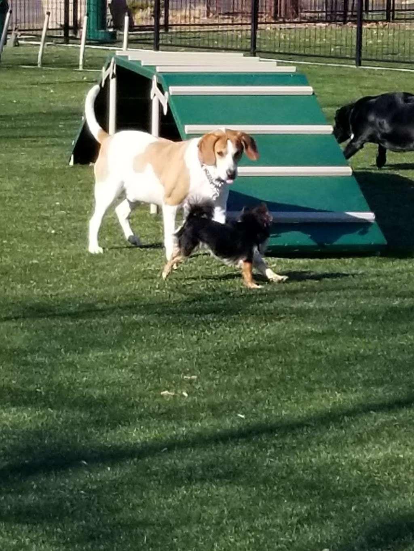 Welcome Home Doggy Daycare - park  | Photo 7 of 10 | Address: 16 Parkview Terrace, Bayonne, NJ 07002, USA | Phone: (201) 890-3347