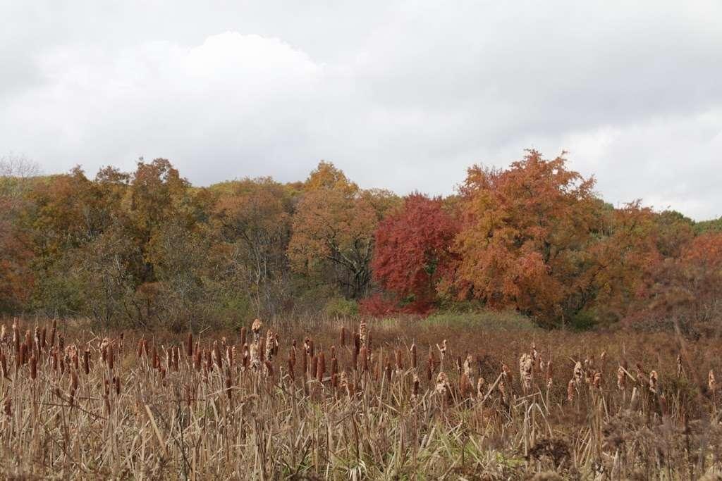Rock Meadow Conservation Area - park  | Photo 9 of 10 | Address: Belmont, MA 02478, USA