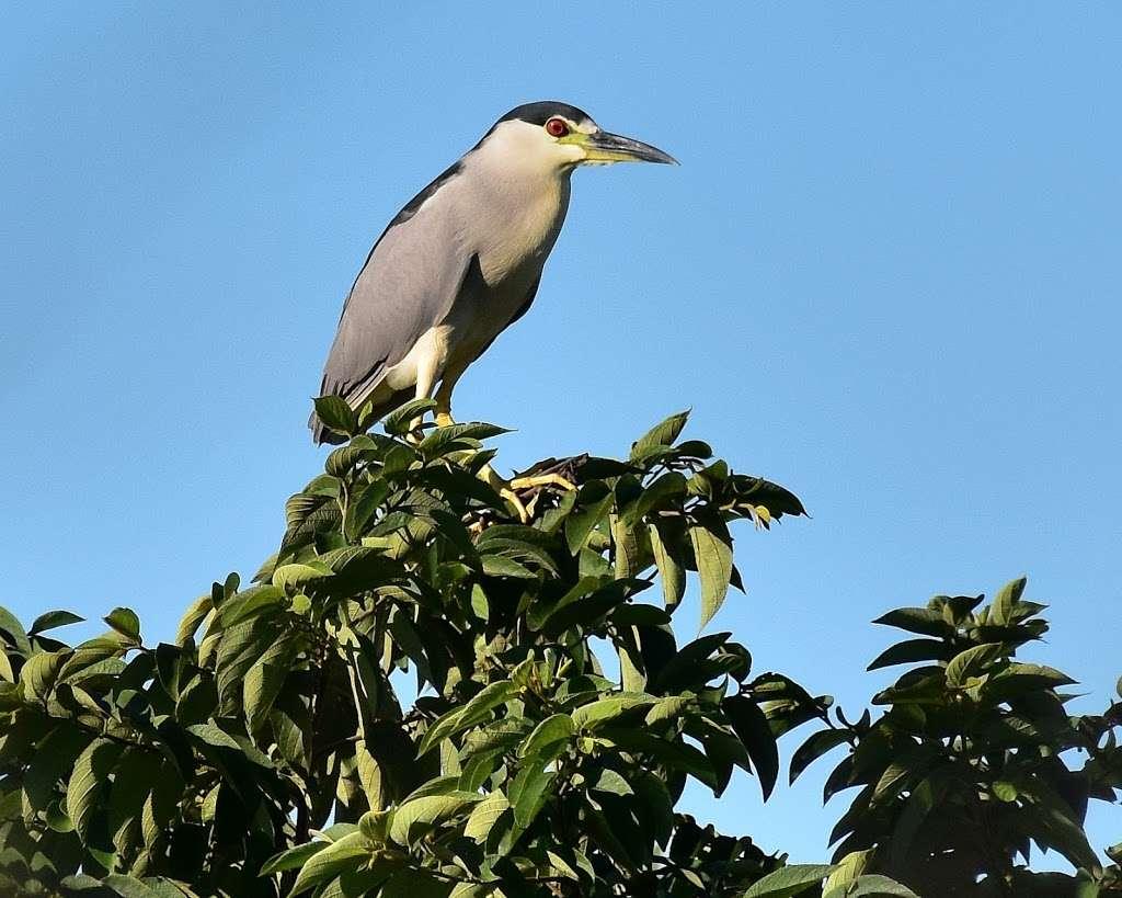 Rotenberger Wildlife Management Area - park  | Photo 7 of 10 | Address: Florida, USA