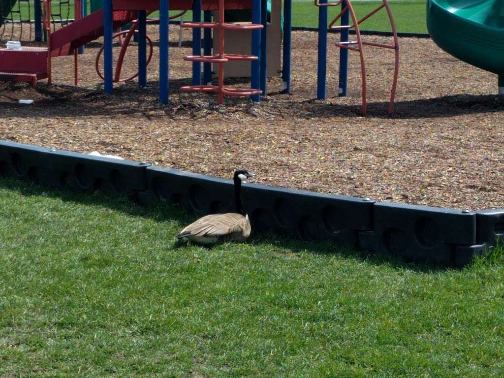 Harold Reskin Park - park  | Photo 2 of 5 | Address: Glendale Heights, IL 60139, USA