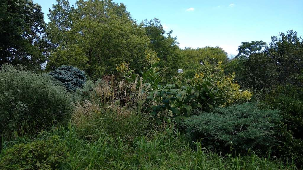 Triton College Botanical Garden - park  | Photo 7 of 10 | Address: 2000 5th Ave, River Grove, IL 60171, USA | Phone: (708) 456-0300