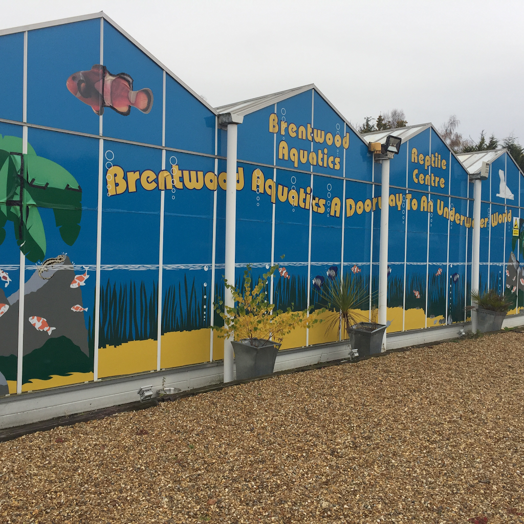 BRENTWOOD AQUATICS - pet store  | Photo 6 of 10 | Address: Ongar Rd, Kelvedon Hatch, Brentwood CM15 0JX, UK | Phone: 01277 295488