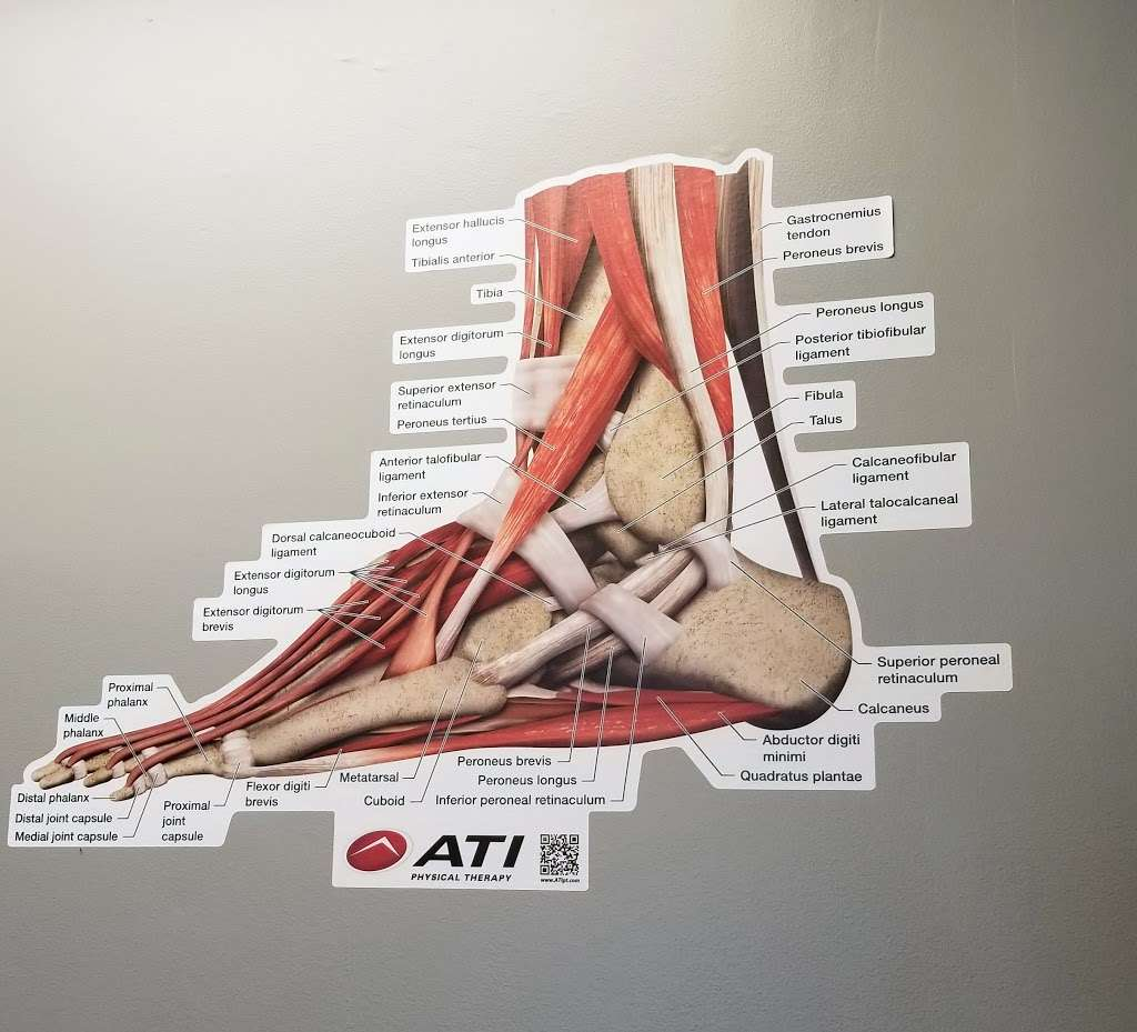 ATI Physical Therapy - health    Photo 8 of 10   Address: 10666 Campus Way S, Greater Upper Marlboro, MD 20774, USA   Phone: (240) 492-0643