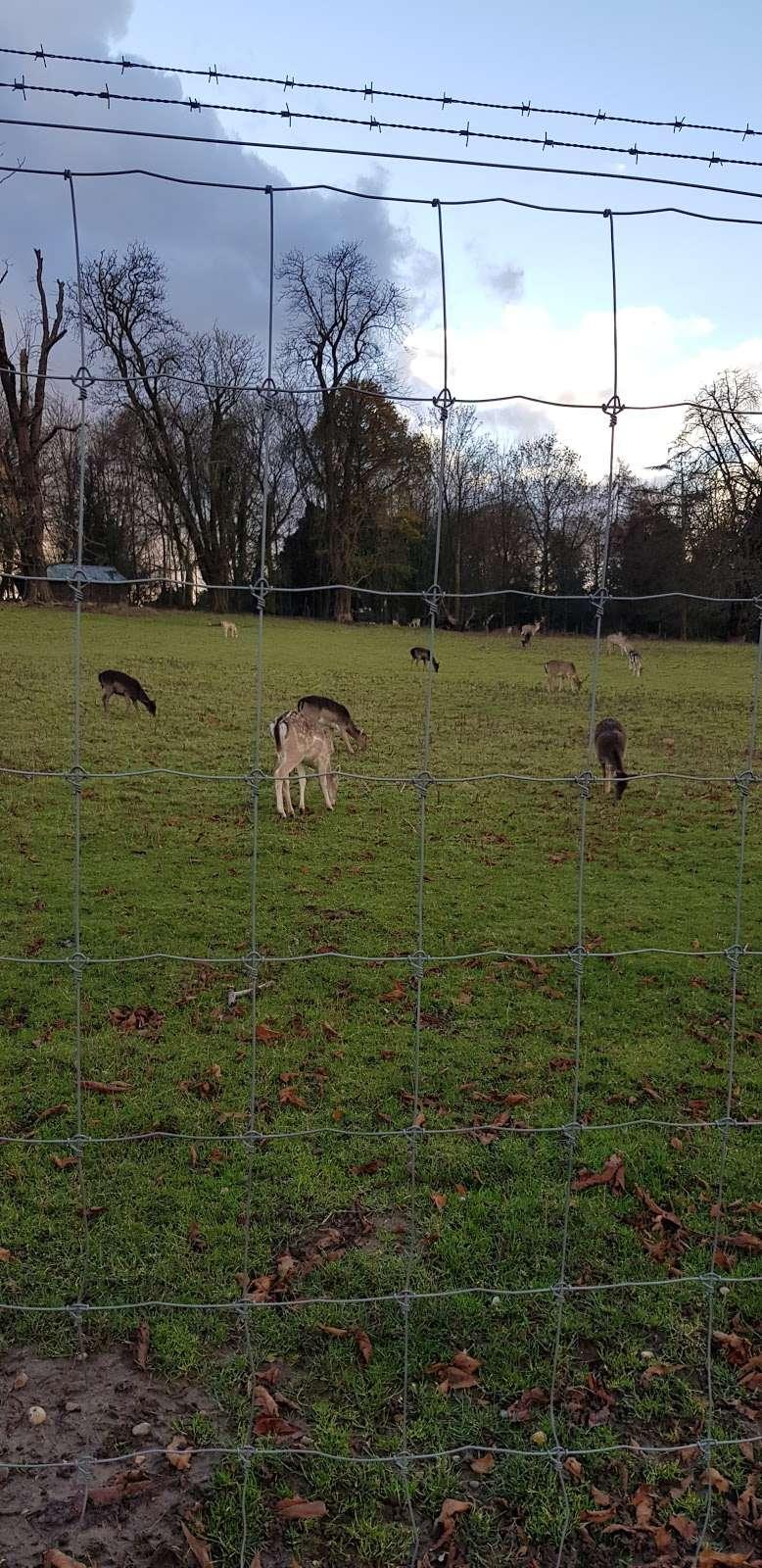 South Weald Deer Enclosure - zoo  | Photo 4 of 4 | Address: Brentwood CM14 5QS, UK